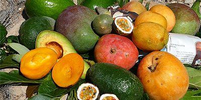 Hedelmävinkit - avokado, passio, mango