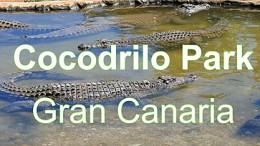 Eläinpuisto Cocodrilo Park pelastaa eläimiä -kanariaTV.fi